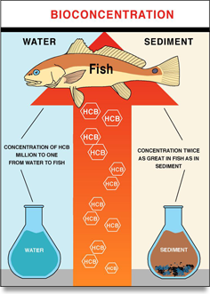 Fish Contamination